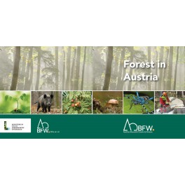 Diverse 46 / Forest in Austria