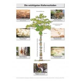 Merkblätter - Waldschutz 2001/1