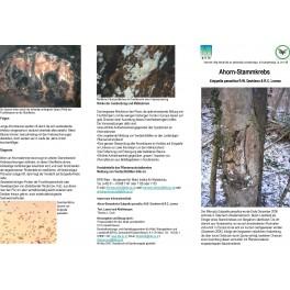 Merkblätter - Waldschutz 2007/1