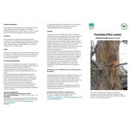 Merkblätter - Waldschutz 2009/1