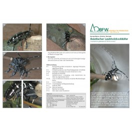 Merkblätter - Waldschutz 2015/1